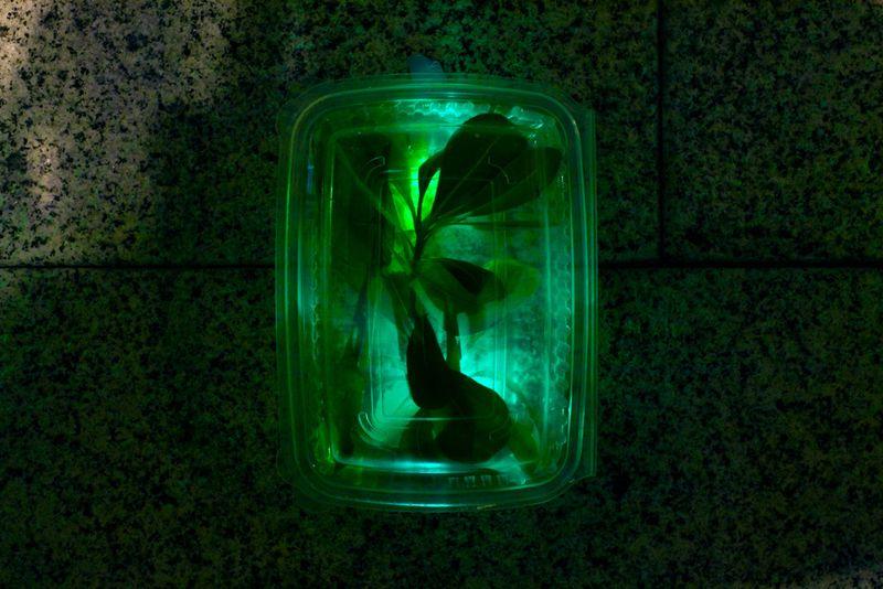 Luzinterruptus_vertical_garden_2
