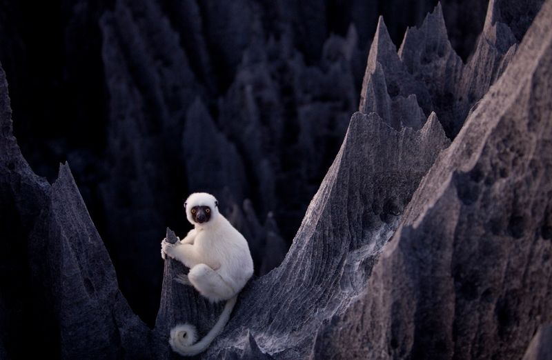 Stone_Forests_Madagascar