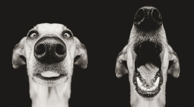 The two basic modes of your dog's front end.